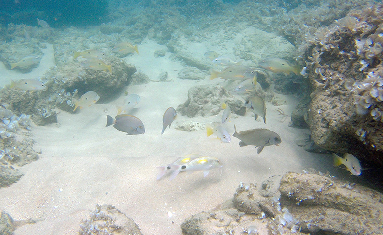 Diving-in-Mozambique
